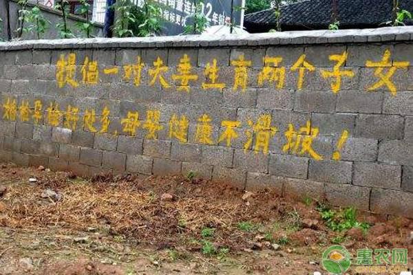 中国人口政策_梁建章:新中国70年人口政策的回顾