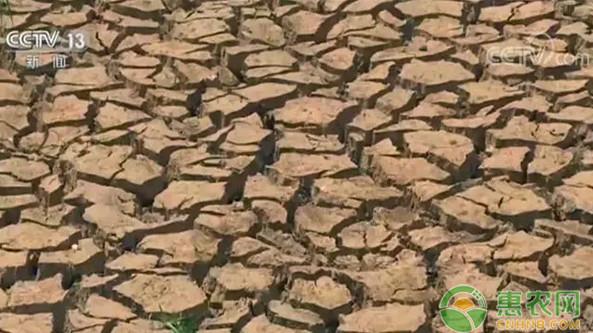 云南遭受10年来最严重干旱,其中西双版纳等地区旱情严重!