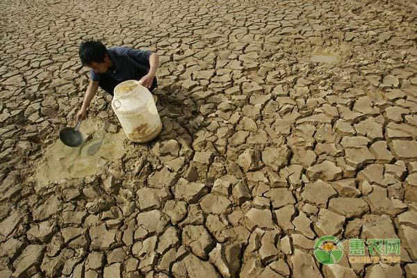 云南旱情形式严峻!造成今年旱情的原因是什么?