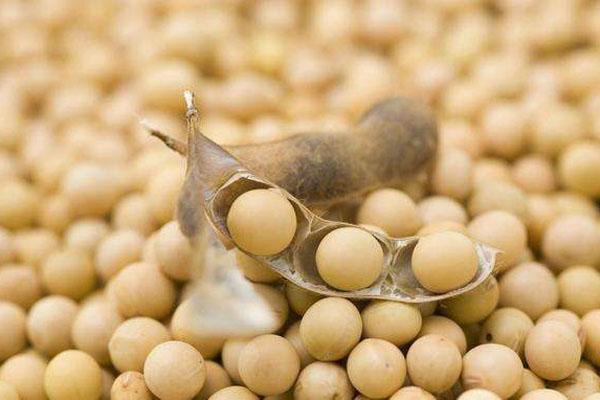 2020年种植大豆有补贴吗?一亩补多少钱?大豆补贴政策解读