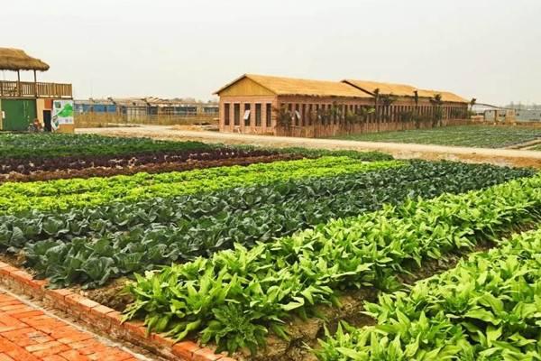 2020年关于家庭农场政策,这四件事有必要提前弄清楚!