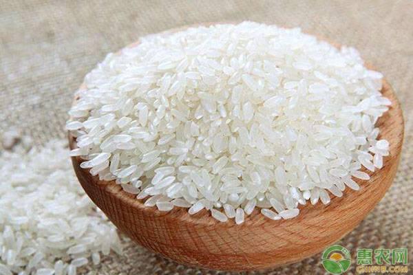 2020年大米价格多少钱一斤?大米价格行情预测