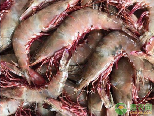 老虎虾多少钱一斤?中国可以养殖吗?老虎虾营养价值和功效