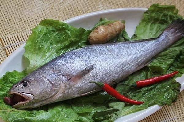 米鱼价格多少钱一斤?有哪些价值前景?(附养殖技术)