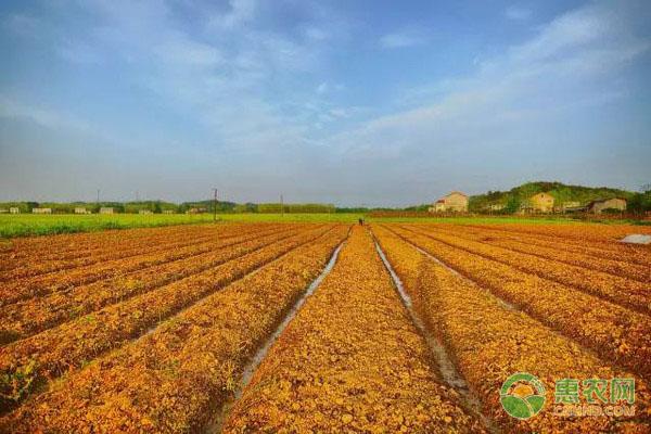 土地流转有什么好处?多少钱一亩?2020土地流转最新政策解读