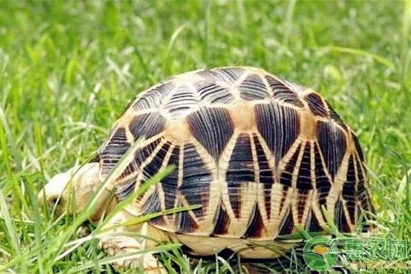 旱龟该怎么养?