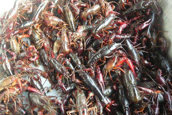 2020年6月端午节前后小龙虾价格行情预测