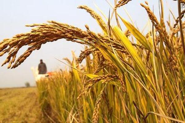 农业税什么时候取消的?取消原因是什么?