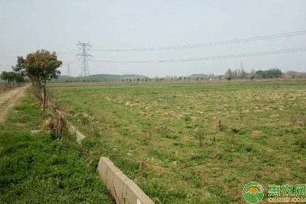 2020年农村土地出租多少钱一亩?需要什么手续?