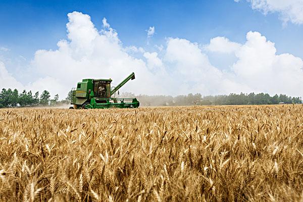 2020专家预测小麦最新价格行情(附6月18日小麦价格)