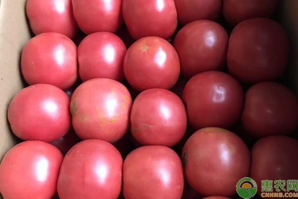 现在西红柿多少钱一斤?2020年西红柿价格预测
