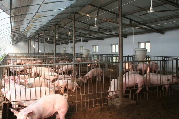 中国发现新型猪流感病毒是什么情况?