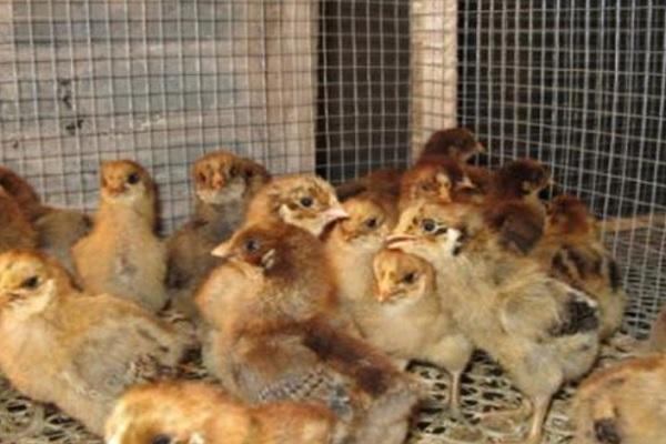 全国将逐步取消活禽市场交易!多地仍决定关闭活禽交易市场