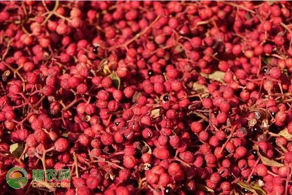 大红袍市场调查图片