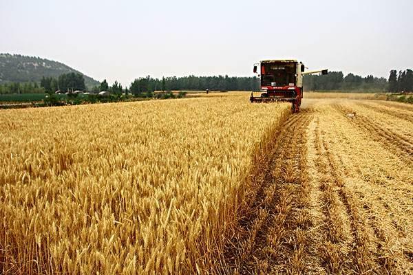 最高856.9公斤!山东创全国冬小麦亩产新纪录