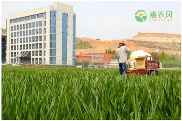 2020安徽今日小麦价格多少钱一斤?