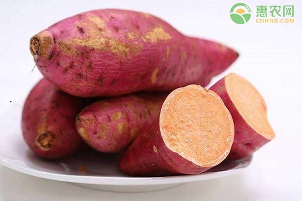 红薯怎么保存?