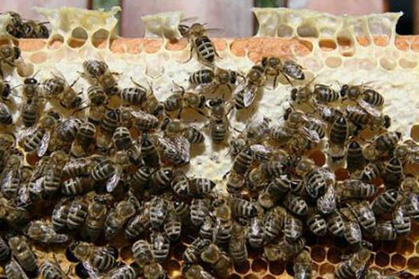 十大有益昆虫是哪些?