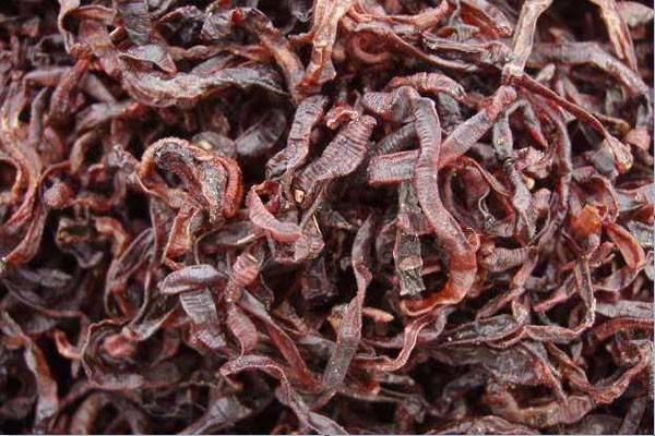 蚯蚓养殖的市场前景怎么样?蚯蚓干多少钱一斤?