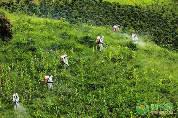 农业农村部举行蝗虫应急防控实战演练 部署西南边境地区黄脊竹蝗防控工作