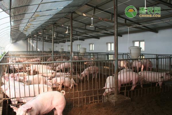 2020年8月全国生猪价格最新行情预测