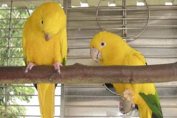 十大名贵鹦鹉种类介绍