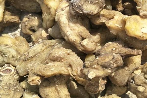 鸡头参多少钱一斤?怎么种植?