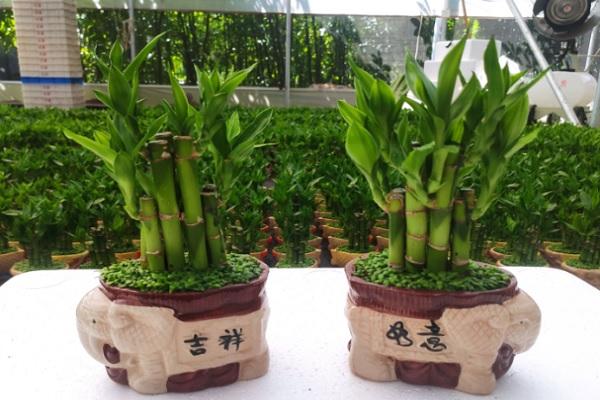 最旺宅的植物有哪些?盘点八大最旺宅植物!