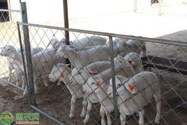 江苏养羊的利润怎样?养羊有补贴吗?