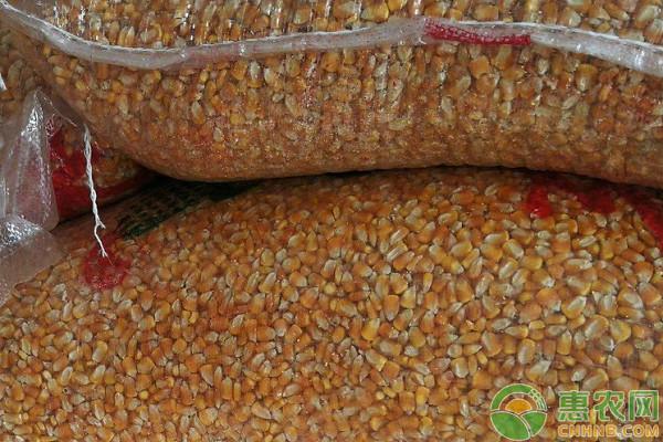 今日玉米价格多少钱一斤?2020年9月18日玉米价格最新行情走势