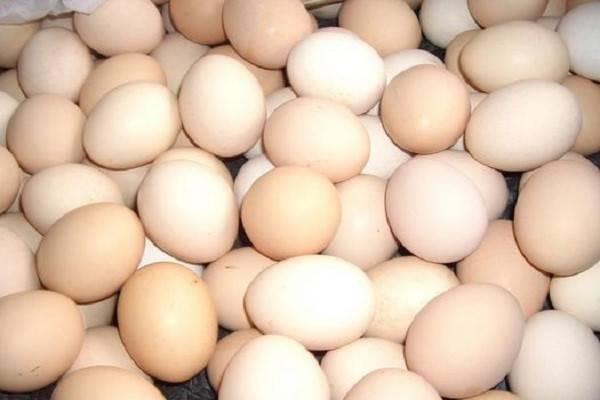 今日鸡蛋价格多少钱一斤?2020双节过后鸡蛋价格走势如何?