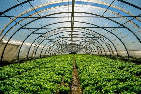 2020年大棚补贴政策:农村建设大棚有哪些补贴?