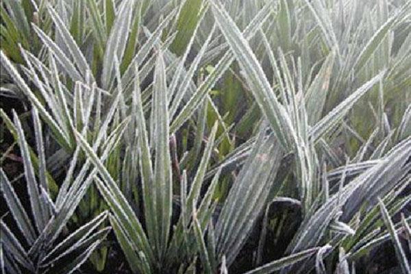 霜降节气的农谚有哪些?这6个你听过吗?