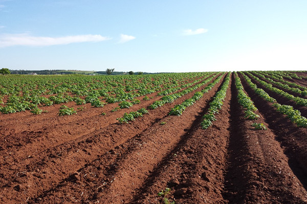 土地征收赔偿标准是多少钱一亩?如何分配?