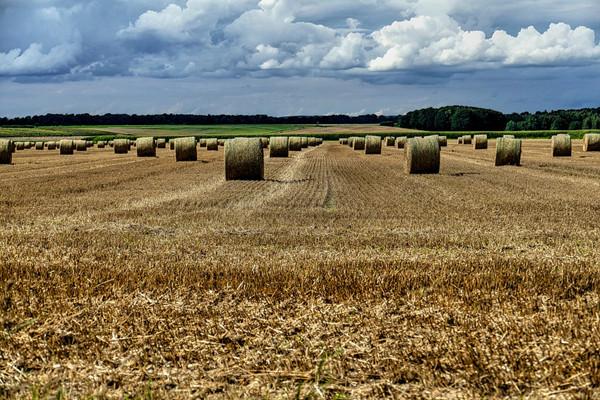 农村征用耕地每亩补偿多少钱?