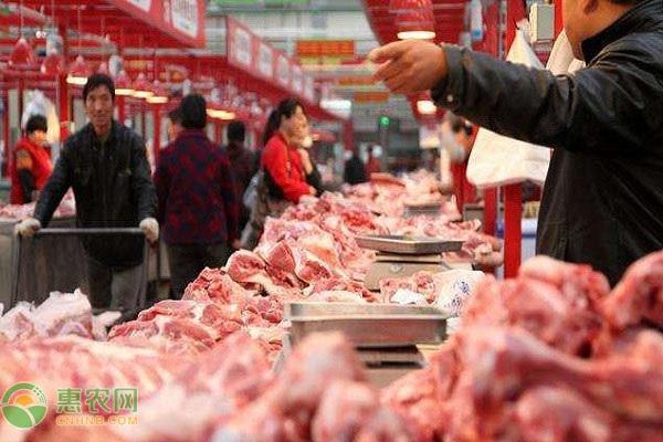 元旦春节期间猪肉价格或出现上涨!附今天生猪价格介绍