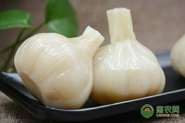糖蒜要如何腌制?糖蒜有何功效和作用?
