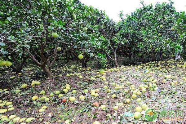 重庆市财政局等5部门关于印发《关于加快农业保险高质量发展工作方案》的通知