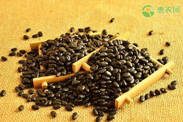黑豆的功效与作用有哪些?