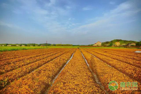 《中国农垦品牌发展报告(2020)》发布