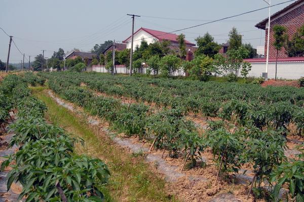 农村一户一宅是多少平方米?2021一户一宅面积标准