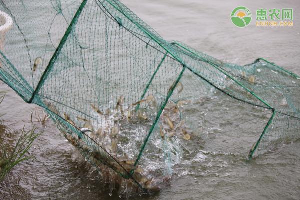 连续三年严查水产养殖用药,这些名称的兽药得小心!