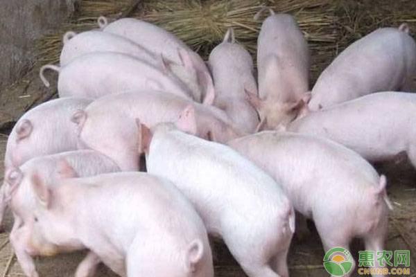2020年国内生产总值首次突破100万亿元 粮食生产再获丰收 生猪产能快速恢复