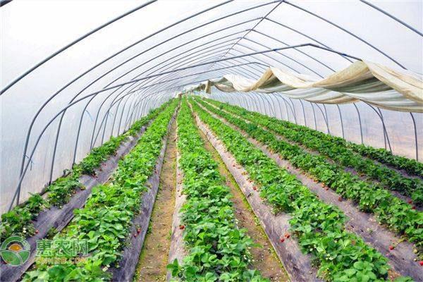 关于做好冬季设施农业安全生产的通知