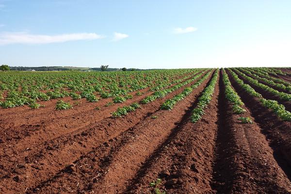 2021农村土地补贴每亩多少?哪些情况没有补贴?