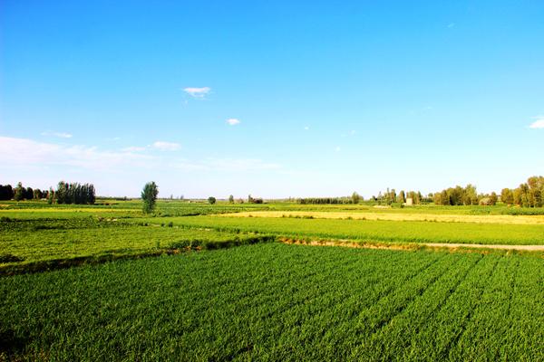 农村最稀缺的行业有哪些?