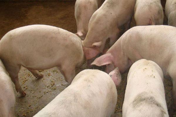 养猪多大规模有补贴?补贴标准是多少?
