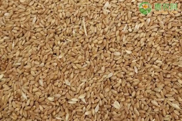 小麦春季田间管理技术意见(浙江地区)