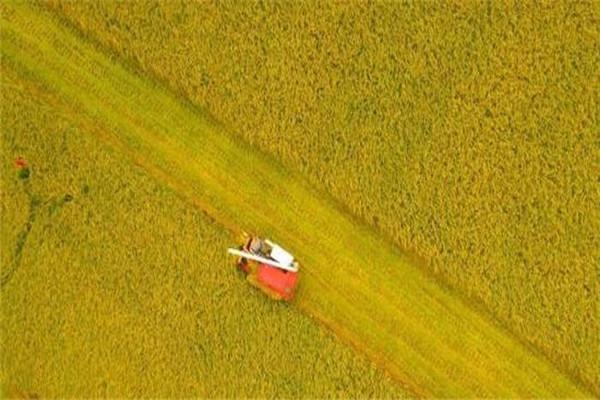 2021年承包土地种植粮食农业补贴有多少钱?