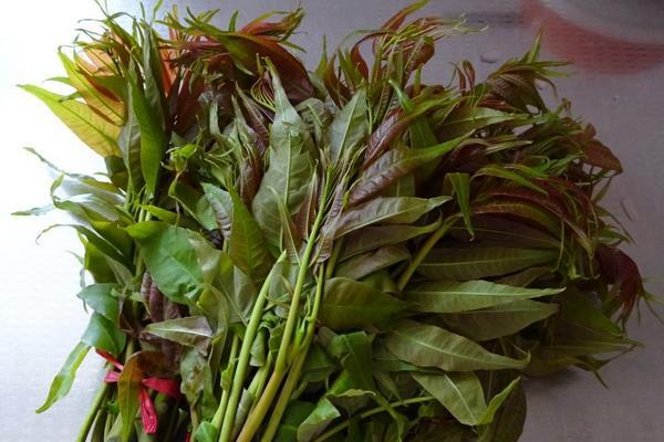 三月常见野菜品种